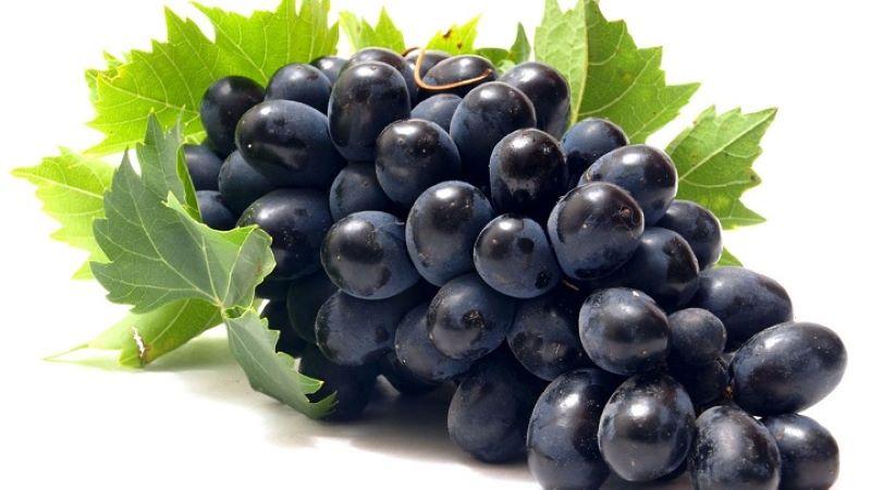 Nho tím là thực phẩm chứa hoạt chất chống gốc tự do, ngăn ngừa tim mạch
