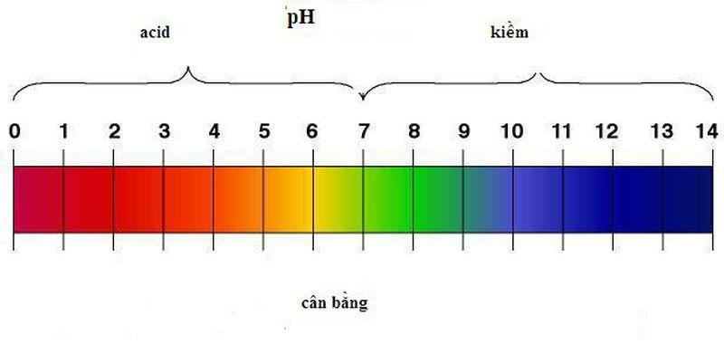 Duy trì độ pH trong dạ dày ở mức bao nhiêu là tốt nhất cho sức khỏe người dùng