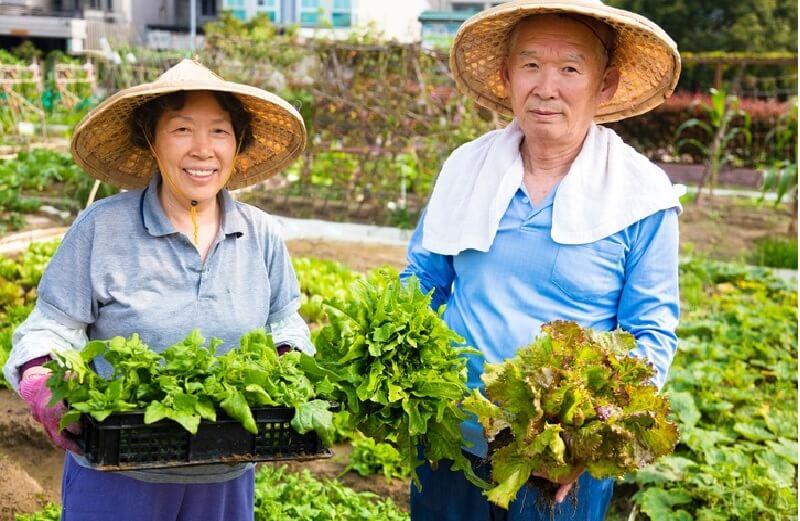 Để có thể duy trì tuổi thọ cao, người Nhật Bản thường ưu tiên lựa chọn thực phẩm tươi thay vì đồ đông lạnh, đồ đóng hộp hay thức ăn nhanh